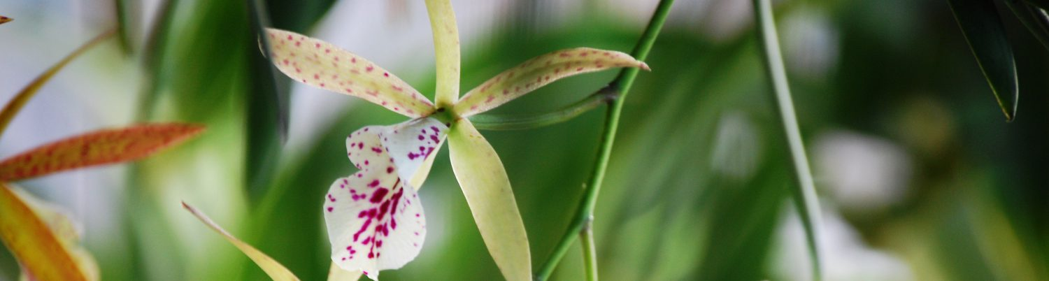 cropped-orchids-21.jpg